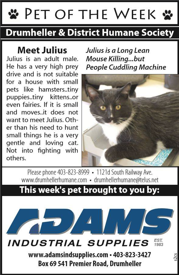 Pet of the Week Julius