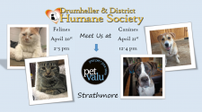 Meet us at Pet Value-Strathmore April 20 & April 21