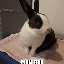 Rabbits for adoption-Mom Bun