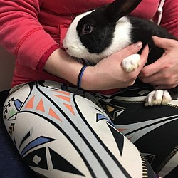 Rabbits for Adoption-Poncho