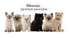 February is Spay & Neuter Awareness Month