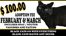 Black Cat Adoption Event