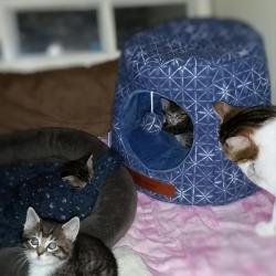 Mitsey's Journey - Having kittens