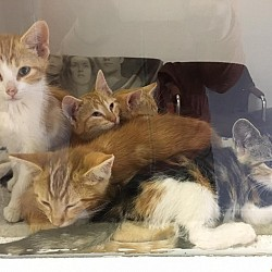 Lots of Kitties