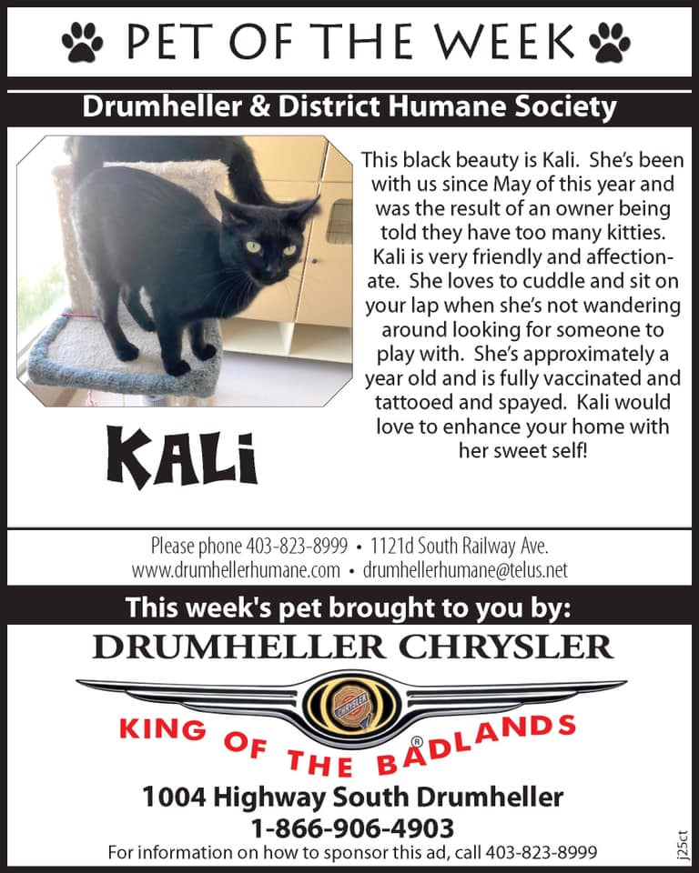 Pet of the Week ~ Kali
