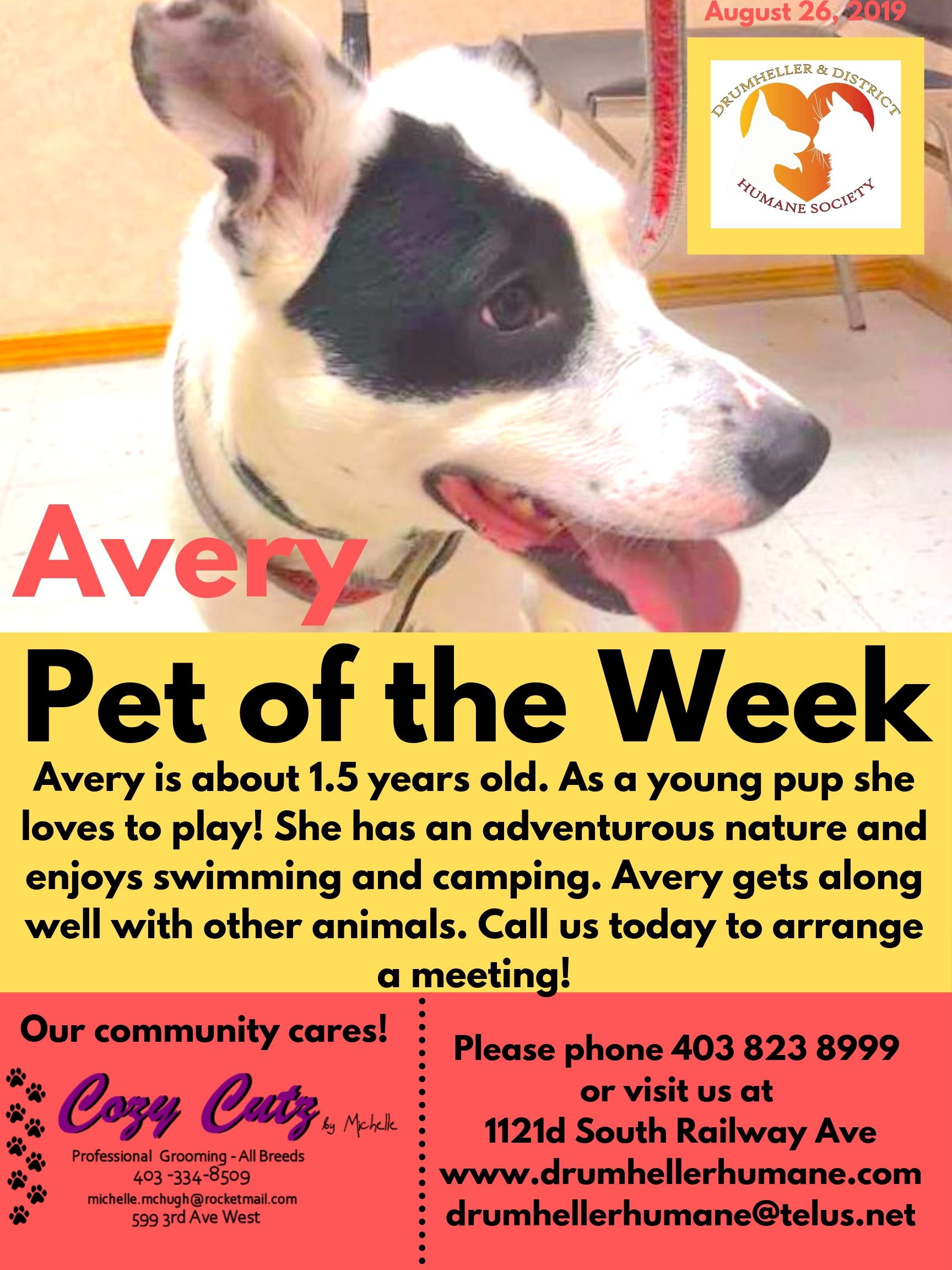Avery Pet of the Week 1