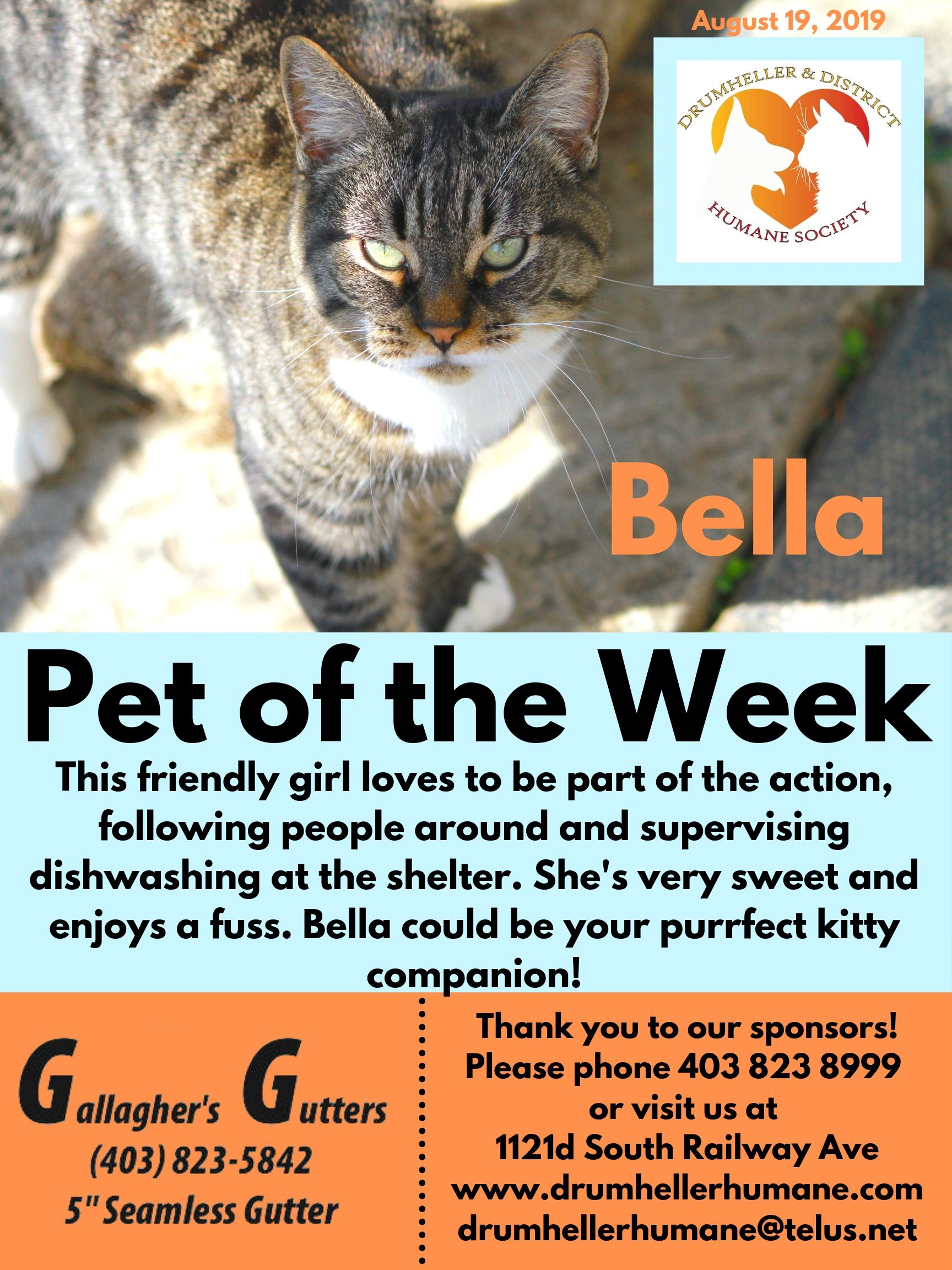 Bella2 Pet of the Week