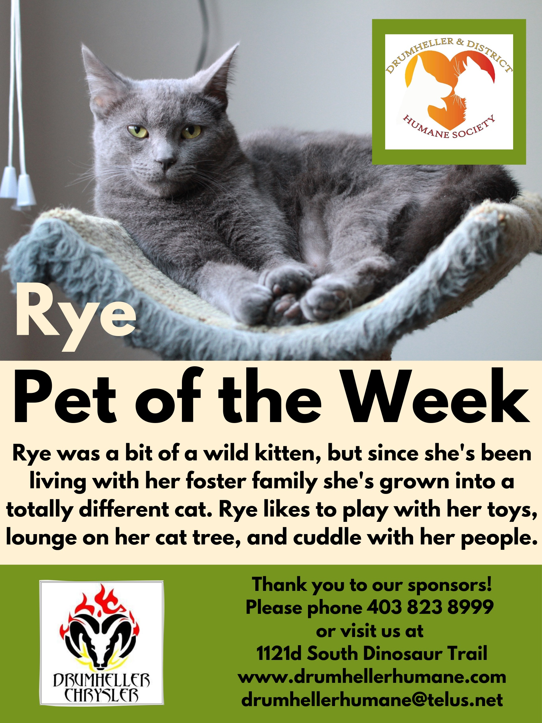 Rye Pet of the Week