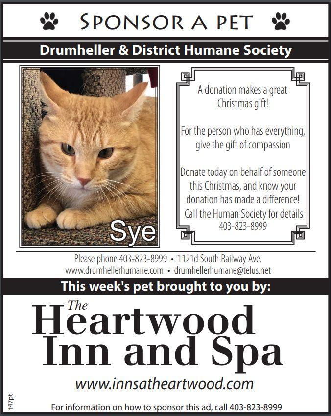 Pet of the Week - Sye - Drumheller