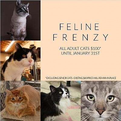 Feline Frenzy 2021