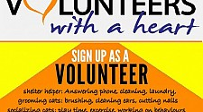 Volunteers Needed to help our Furry Friends